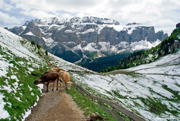 DSC_0325_Dolomites_p